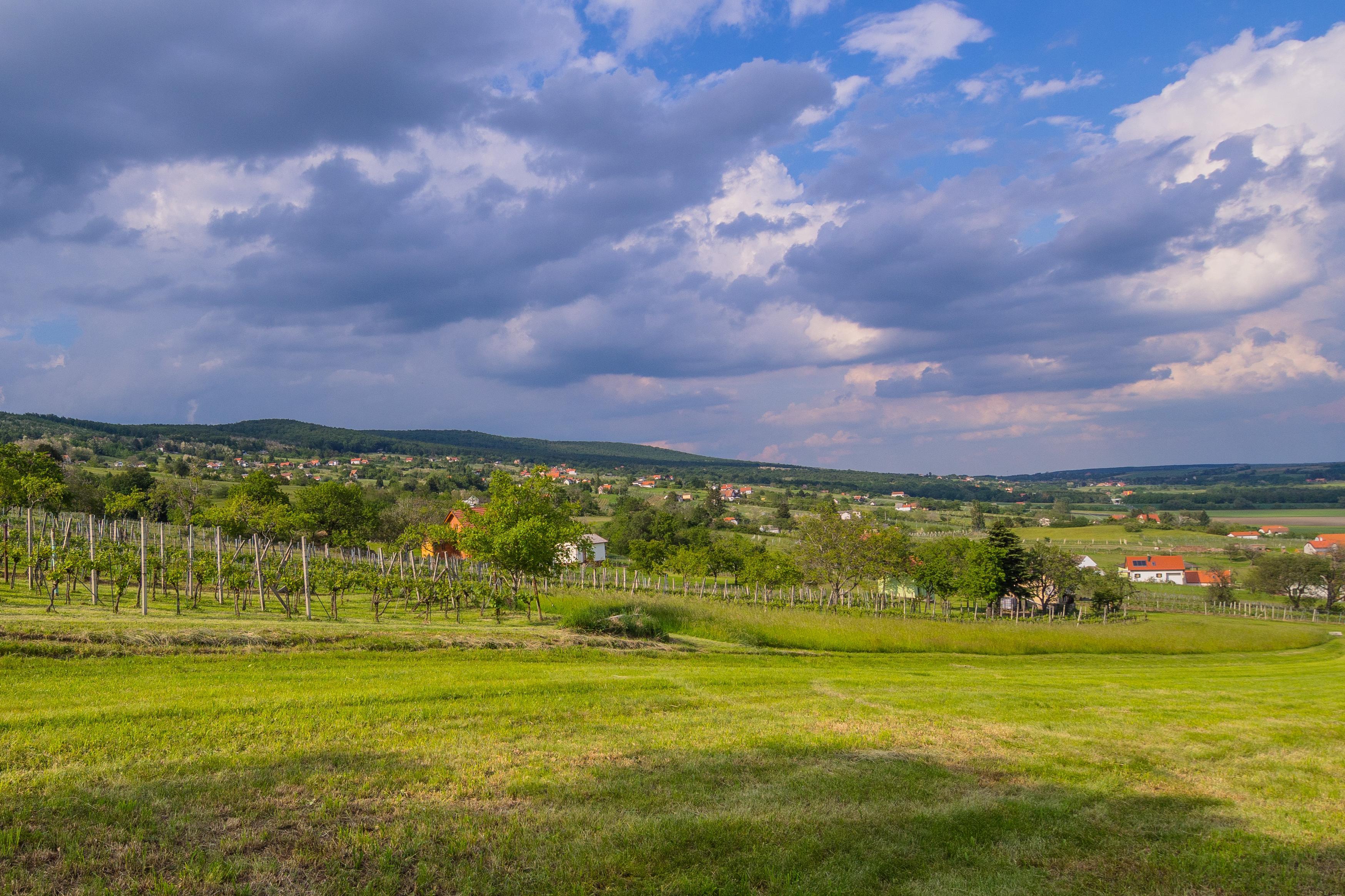 Weingebiet Rechnitz