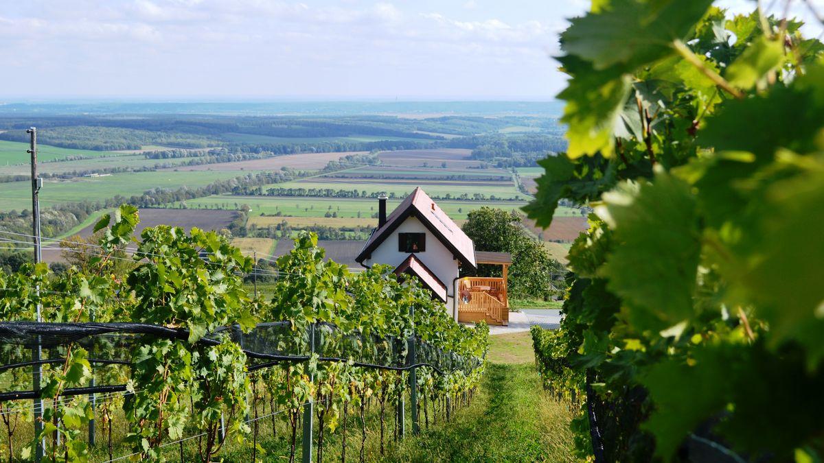 Weinblick